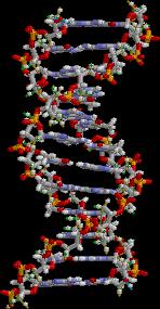 Principales caracteristicas del ADN