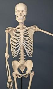 Sistema oseo, huesos del cuerpo humano
