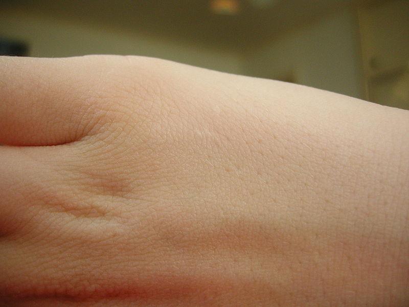 Piel humana, funciones de la piel, características