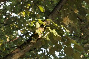 La fotosintesis- que es la fotosintesis