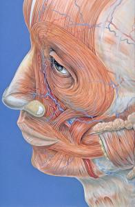 musculos de la cara, expresiones faciales, comunicacion