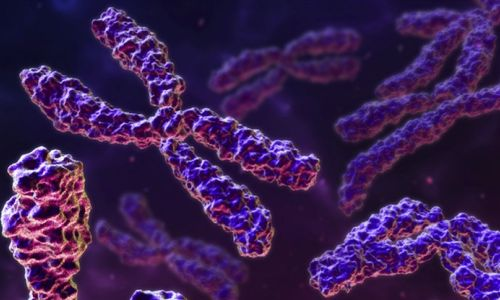 Clases de cromosomas